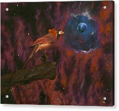 Cardinal Of Cassiopeia Acrylic Print by Eric Allen