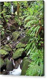 Caribbean Cruise - Dominica - 1212247 Acrylic Print by DC Photographer