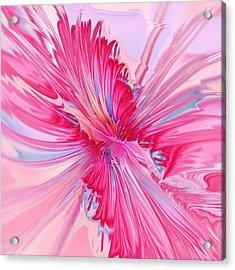 Carnation Pink Acrylic Print by Anastasiya Malakhova