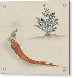 Carrots Acrylic Print by Aged Pixel