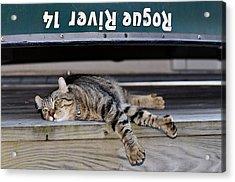 Cat And A Canoe Acrylic Print by Susan Leggett