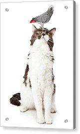 Cat Looking Up At A Bird Acrylic Print by Susan Schmitz