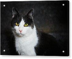 Cat Portrait With Texture Acrylic Print by Matthias Hauser