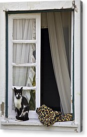 Cat Sitting On The Ledge Of An Open Wood Window Acrylic Print by David Letts