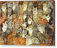 Cat Spread Acrylic Print by Ditz