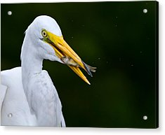 Catch Of The Day Acrylic Print by Andres Leon