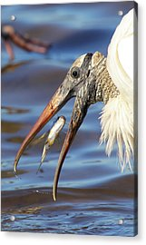 Catch Of The Day Acrylic Print by Bruce J Robinson