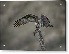 Catch Of The Day Acrylic Print by Gary Hall