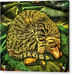 Catnappin' On A Cold Rainy Sunday Acrylic Print by Randy Forrester