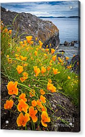 Cattle Point Poppies Acrylic Print by Inge Johnsson