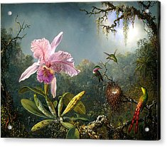 Cattleya Orchid And Three Brazilian Hummingbirds Acrylic Print by Emile Munier
