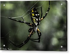 Caught In The Web Acrylic Print by Steven  Taylor