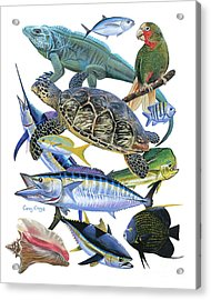Cayman Collage Acrylic Print by Carey Chen