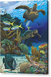 Cayman Turtles Re0010 Acrylic Print by Carey Chen