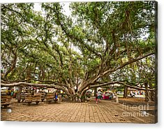Central Court - Banyan Tree Park In Maui. Acrylic Print by Jamie Pham