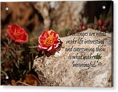 Challenges Acrylic Print by Diane E Berry