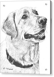 Charcoal Drawing Yellow Lab In Profile Acrylic Print by Kate Sumners