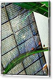 Charlotte's Web Acrylic Print by Meagan Hoelzer