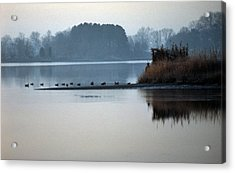 Checking The Spread Acrylic Print by Skip Willits