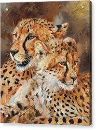 Cheetah And Cub Acrylic Print by David Stribbling