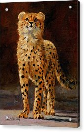Cheetah Cub Acrylic Print by David Stribbling