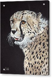 Cheetah Glory Acrylic Print by John Hebb