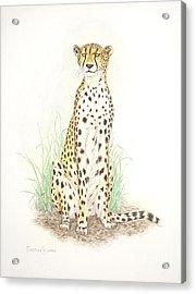 Cheetah On Lookout Acrylic Print by Dag Sla