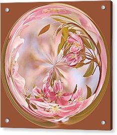 Cherry Blossom Orb Acrylic Print by Kim Hojnacki