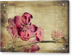 Cherry Blossom With Textures Acrylic Print by John Edwards