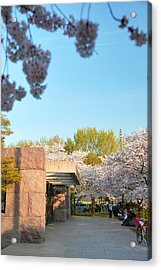 Cherry Blossoms 2013 - 021 Acrylic Print by Metro DC Photography