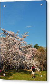 Cherry Blossoms 2013 - 029 Acrylic Print by Metro DC Photography