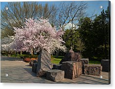Cherry Blossoms 2013 - 058 Acrylic Print by Metro DC Photography