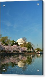 Cherry Blossoms 2013 - 098 Acrylic Print by Metro DC Photography