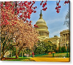 Cherry Blossoms At The Capitol Acrylic Print by Nick Zelinsky