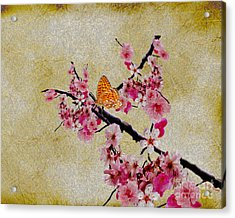 Cherry Blossoms Acrylic Print by Cheryl Young