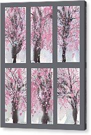 Cherry Blossoms Acrylic Print by Sumiyo Toribe