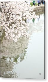 Cherry Blossoms - Washington Dc - 0113105 Acrylic Print by DC Photographer