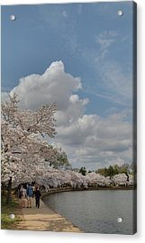 Cherry Blossoms - Washington Dc - 011372 Acrylic Print by DC Photographer