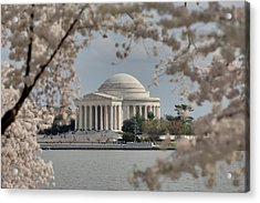 Cherry Blossoms With Jefferson Memorial - Washington Dc - 011324 Acrylic Print by DC Photographer