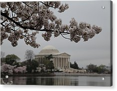Cherry Blossoms With Jefferson Memorial - Washington Dc - 011345 Acrylic Print by DC Photographer