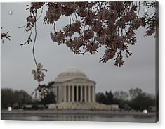 Cherry Blossoms With Jefferson Memorial - Washington Dc - 011349 Acrylic Print by DC Photographer
