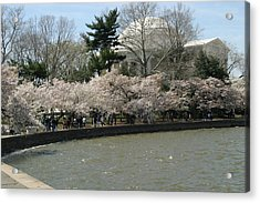 Cherry Blossoms With Jefferson Memorial - Washington Dc - 01139 Acrylic Print by DC Photographer