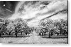 Cherry Grove At Seaqust Acrylic Print by Stephen Mack