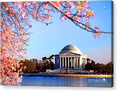 Cherry Jefferson Acrylic Print by Olivier Le Queinec