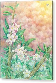 Cherryblossoms Acrylic Print by Charity Goodwin