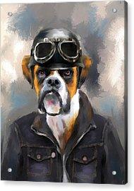 Chic Boxer Aviator Acrylic Print by Jai Johnson