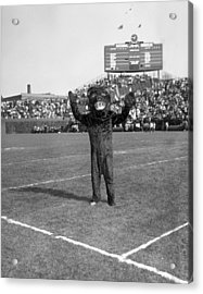 Chicago Bears Mascot In Front Of Wrigley Field Scoreboard Acrylic Print by Retro Images Archive