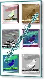 Chickadee Acrylic Print by Becky Sterling