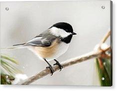Chickadee Acrylic Print by Christina Rollo