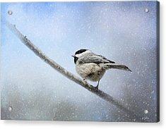 Chickadee In The Snow Acrylic Print by Jai Johnson